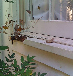 Decorating rotted window sill repair photo gallery of for Window sill replacement